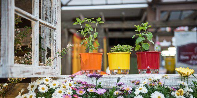 Os vasos autoirrigáveis vão te ajudar a deixar as plantas mais