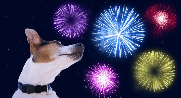 Cachorros sofrem muito com o barulho dos fogos de artifício.