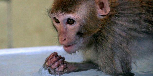 Macaco filhote em