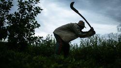 Sem dinheiro, fiscalização de trabalho escravo está