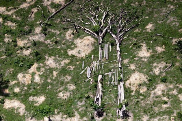 Árvores caídas em área de preservação com produção ilegal de
