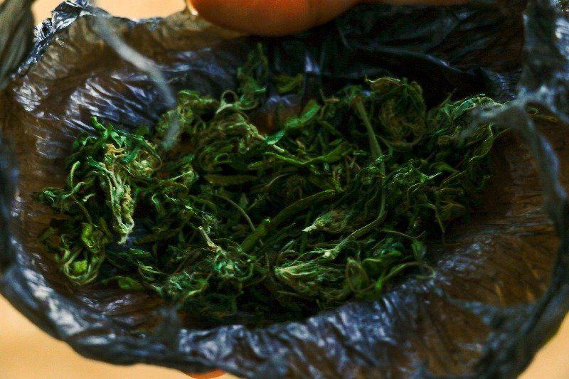 Há relatos da presença da cannabis na região desde o século