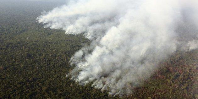 O desmatamento é um fator-chave por trás do aquecimento global e responde por cerca de 15% das emissões...