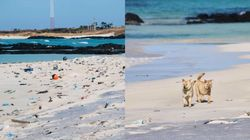 새해가 되면 제주 해변에 쓰레기가 밀려오는