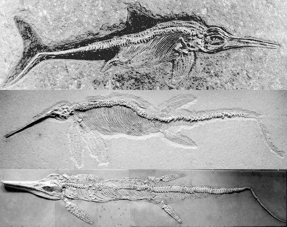 Το απίστευτο «τέρας της θάλασσας» που έζησε πριν 200 εκατ. χρόνια αποκαλύπτεται σε