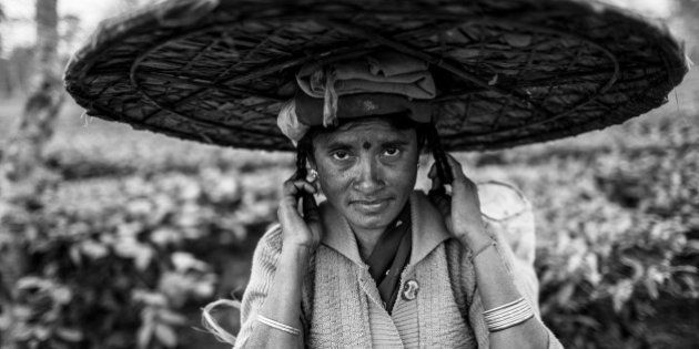 [UNVERIFIED CONTENT] portrait of the woman Tea picker with the big hat near Dibrugarh, Assam,