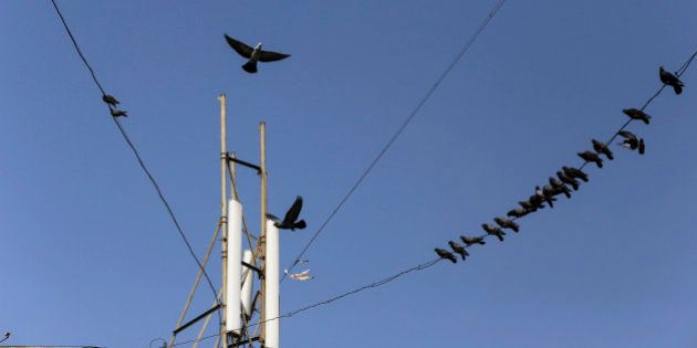 Birds sit on cables connected to a mobile phone telecommunications tower in Mumbai, India, on Wednesday,...