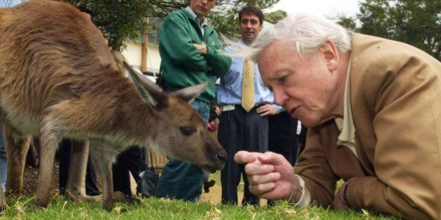 Leading natural history authority and BBC broadcaster Sir David Attenborough, watched by zoo staff, reaches...