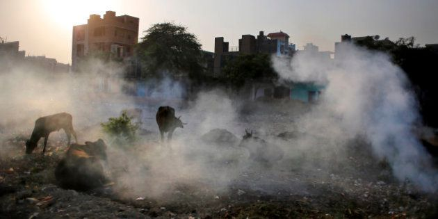 Cows are covered in smoke rising from burning garbage in New Delhi, India, Friday, Oct. 17, 2014. India...