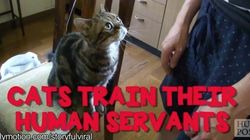 Video: This Is Why Cats Will (Probably) Rule Over Human Beings One