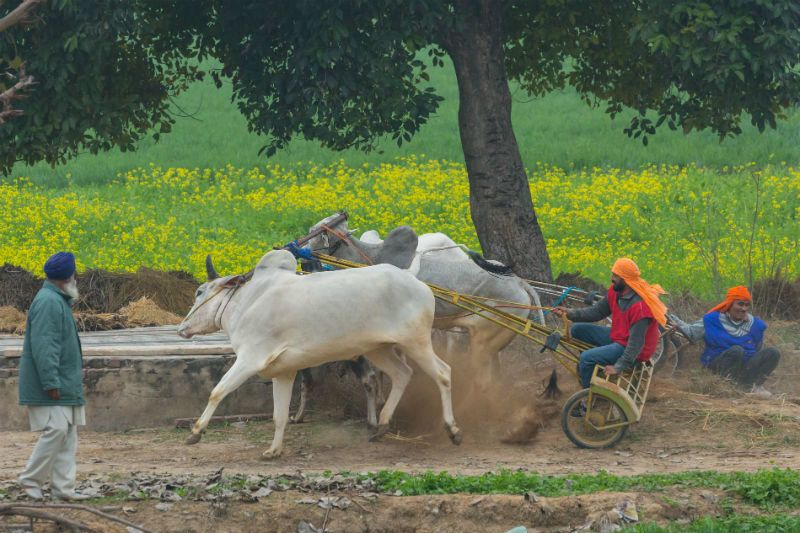 Photoblog: Bullock Cart Races, Dancing Ponies And Bike Stunts At Kila Raipur Rural