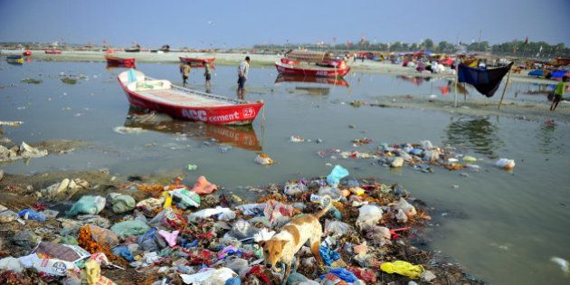 A dog scavenges in the polluted waters of the Ganga river at Sangam in Allahabad on April 14, 2013. AFP...