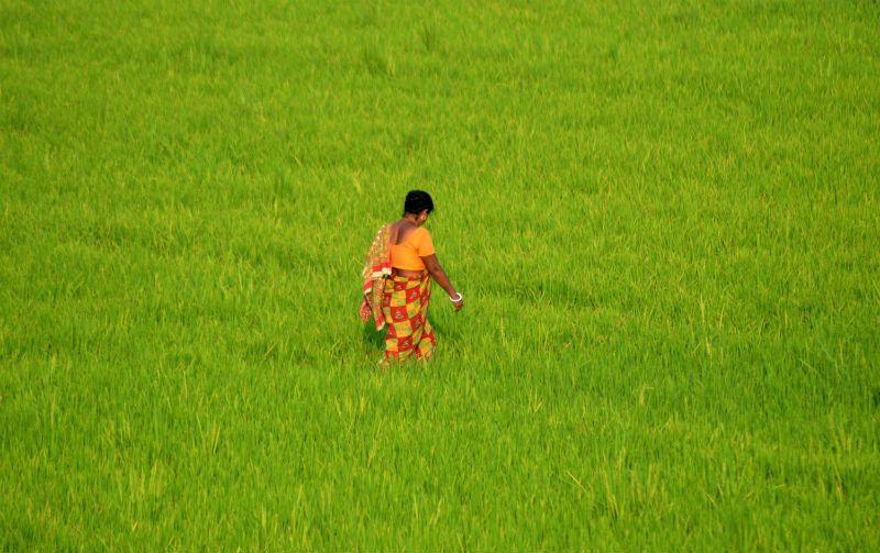 Photoblog: A Kolkata Less