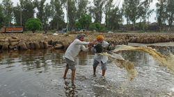 Indian Farmers Hit Hard By Unseasonal