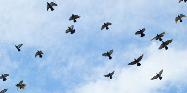 When I go to have lunch at KFC I always have to pass under these pigeons. There are like hundreds of...