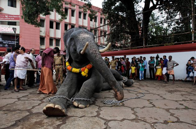 Pamela Anderson Asks For Thrissur Pooram To Be Elephant-Free, But Locals