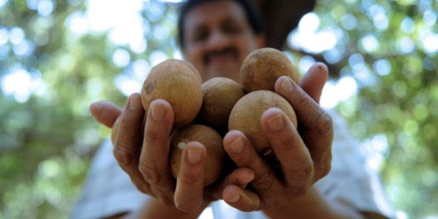 Indian cardiologist Dinesh Patel, who practices organic farming methods, poses with a handful of chikoos...