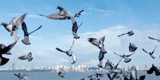 BOMBAY, INDIA: Pigeons take flight into the blue sky along Marine Drive with the city skyline as a backdrop...