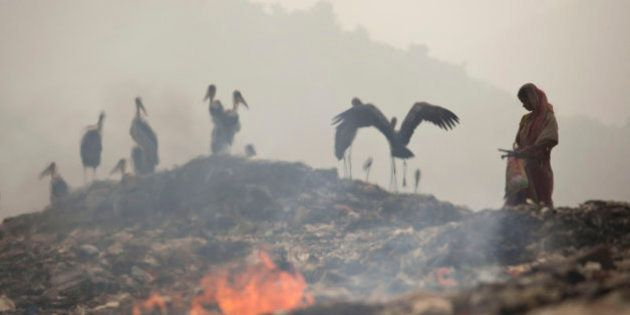 Smoke rises from burning garbage as an Indian woman looks for recyclable material near resting greater...