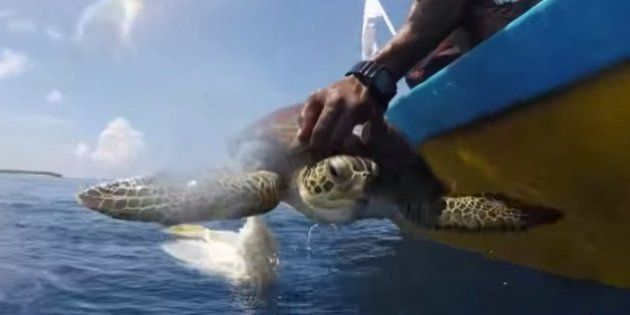 WATCH: The Plight Of This Adorable Turtle Will Make You Think Twice About Throwing Junk In The