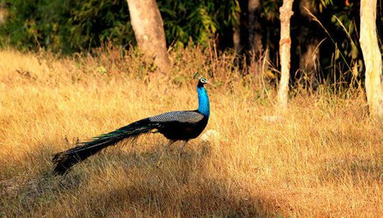 Pictures: Let The Forests Of Chhattisgarh Speak To