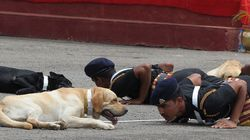 What Indian Army Does To Its Canine Comrades On Retirement Will Shock