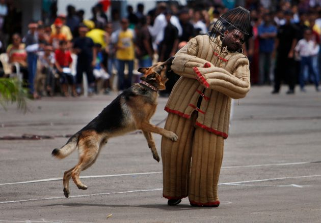 SHOCKING: Indian Army Euthanises Its Canine Comrades On