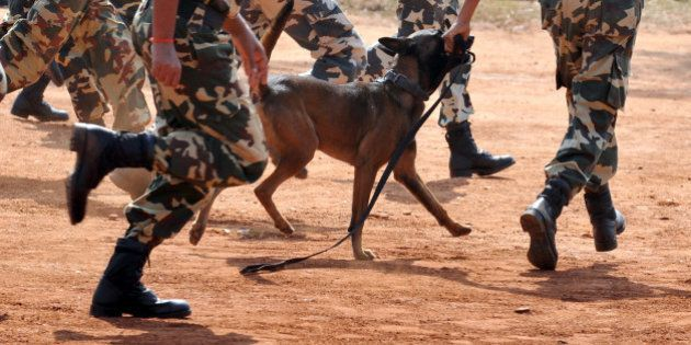 A Belgian Shepherd Dog (Malinois) runs with its handler amongst Central Police Reserve Force (CRPF) commandos...