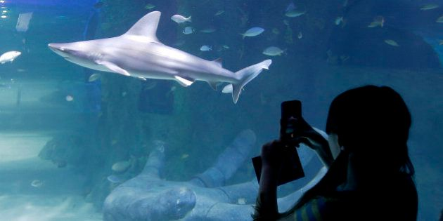 In this April 27, 2015 photo, a visitor takes a photo of the shark tank at the new Sea Life Aquarium...