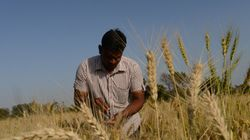 Gujarat Farmer Paves Way For A New, Climate-Smart Cash Crop --