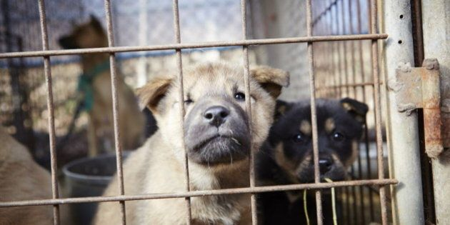 IMAGE DISTRIBUTED FOR HUMANE SOCIETY INTERNATIONAL - In this image released on Tuesday, Jan. 6, 2015,...