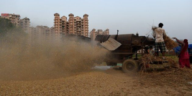Indian farmers work in a field as they seperate husk from harvested wheat grains by using a harvestor...