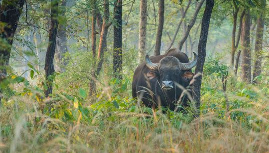 Beasts And Bureaucrats: A Trip To Satpura National