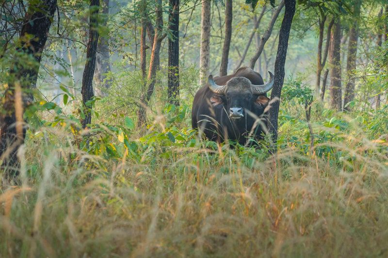 Beasts And Bureaucrats: A Trip To Satpura National