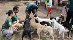The Link Between Animal Cruelty And Human