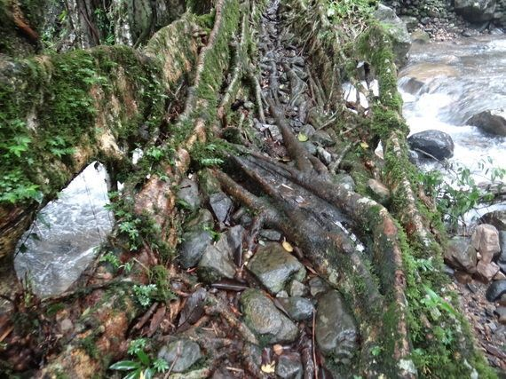 The Agony And Ecstasy Of Experiencing Cherrapunji's Living Root