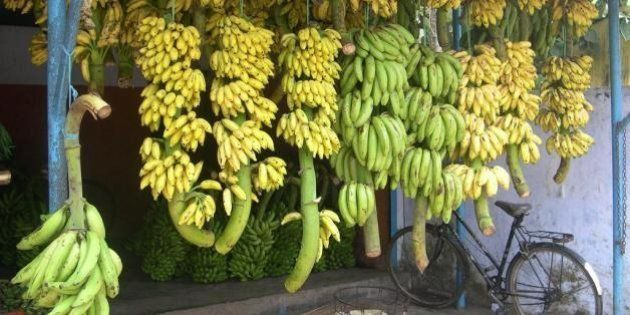 Bananas are plenty in Kerala (south India) and you get them in different sizes and shapes.The one on...