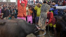 How We Stopped The Massacre Of Animals At