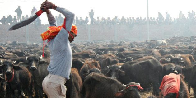 A Hindu devotee slaughters a buffalo as an offering to the Hindu goddess Gadhimai in Bariyapur village,...