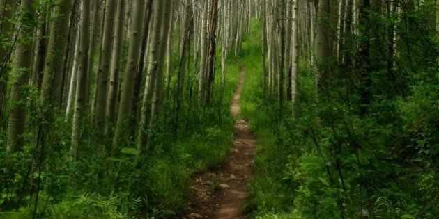 Hiking On The Path Of Life: The Role Of A