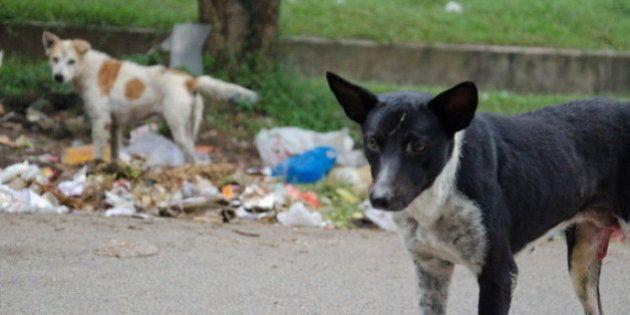 The Problem Of Plenty: Managing India's Stray Dog