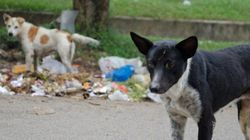 The Problem Of Plenty: Managing India's Stray Dog