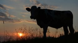 Holy Cancer: How A Cow Saved My Life (Book