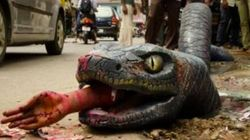 My Anaconda Don't! Giant, Fake Reptile Hopes To Shame Authorities Into Fixing Bengaluru