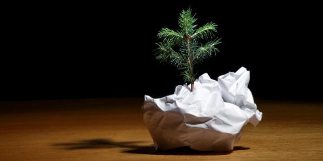 Tree Emerging from Crumpled