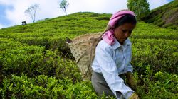 Podcast: The Story Of The Greatest Tea In The