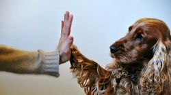 The Rapid Growth of the Indian Pet Care