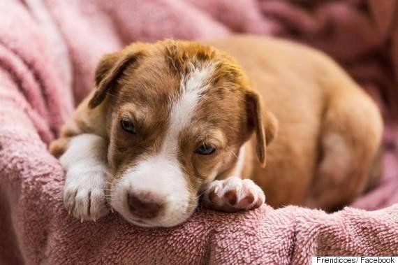Animal Saviour Friendicoes Is Alive But On Life