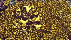 WATCH: Is The Dahi Handi India's Most Dangerous