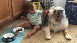 This Adorable Video Of A Baby Hand-Feeding A Dog Will Make Your